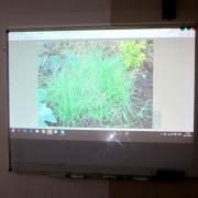 Вебинар на курсе ландшафтного дизайна #2